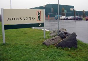 Monsanto Glyphosate UE Bayer